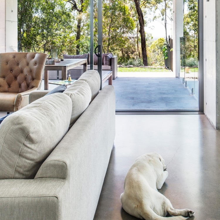 A dog looks out through a wide doorway from the inside of the home
